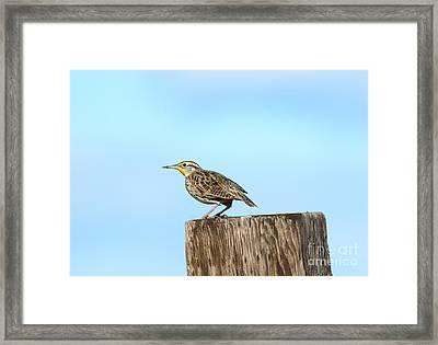 Meadowlark Roost Framed Print by Mike Dawson
