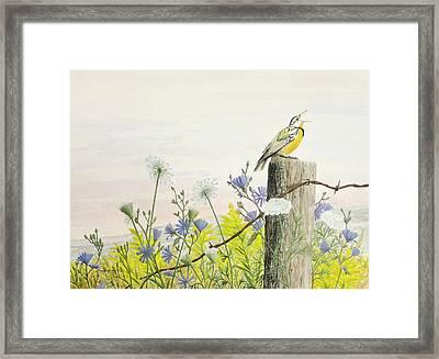 Meadowlark Framed Print by Steve Mountz