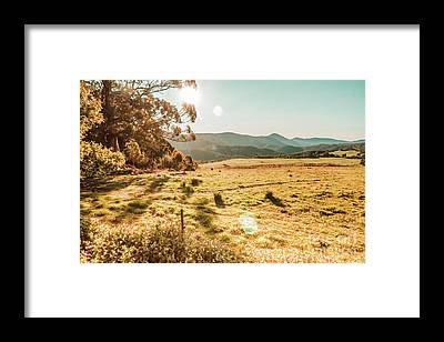 Distant Trees Framed Prints