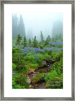Meadows In The Mist Framed Print by Mike Dawson