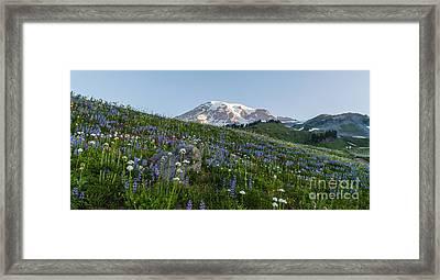 Meadows Of Glory Framed Print by Mike Reid