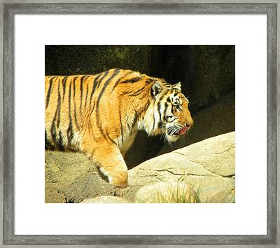 Framed Print featuring the photograph Meal Time by Sandi OReilly