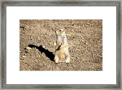 Mean Old Prairie Dog Framed Print by Christopher Wood