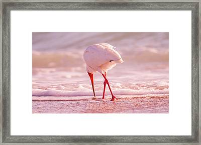 Meandering Beauty Cortez Beach Framed Print by Betsy Knapp