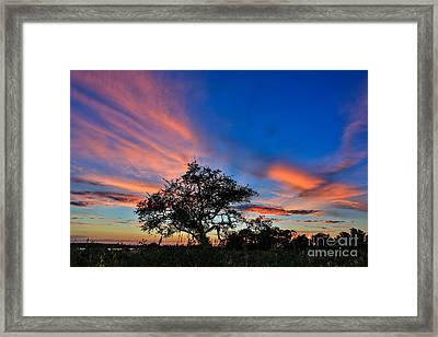 Meditate Framed Print by Mina Isaac