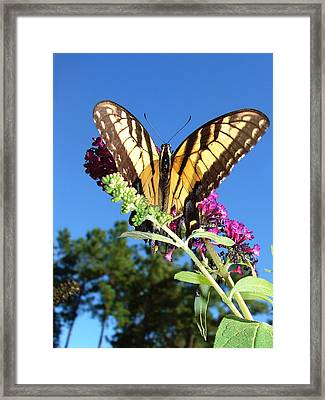 Meditations Framed Print by Laura Brightwood