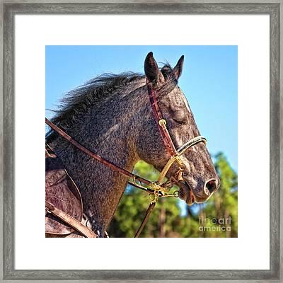 Meditative Horse Framed Print by Stephanie Hayes