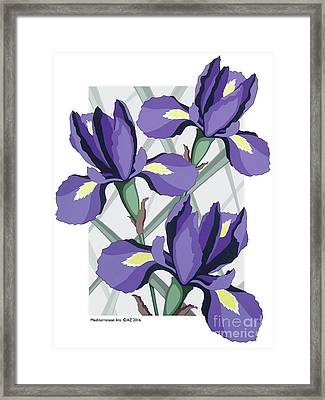 Mediterranean Iris Framed Print