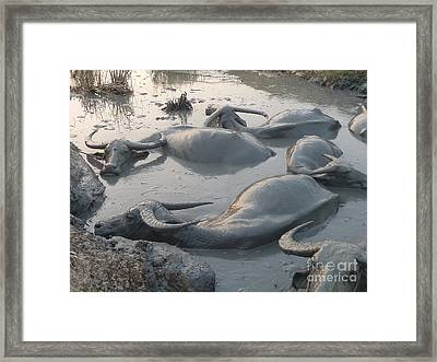 Framed Print featuring the photograph Medium Shot Of A Group Of Water Buffalos Wallowing In A Mud Hole by Jason Rosette