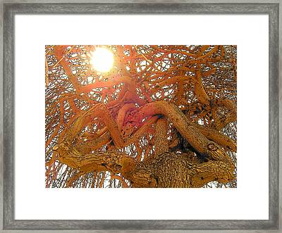 Medusa Arboraceous Framed Print by Robert  Collier