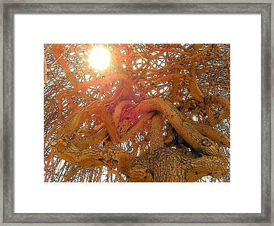 Medusa Arboraceous Framed Print by Robert  Collier