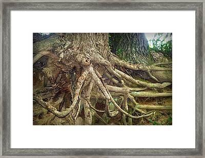 Medusa Framed Print by Cricket Hackmann