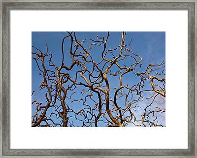 Medusa Limbs Reaching For The Sky Framed Print by Douglas Barnett