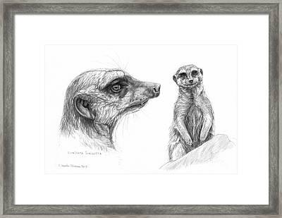 Meerkat - Suricata Suricatta Framed Print by Svetlana Ledneva-Schukina