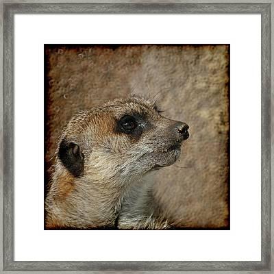 Meerkat 3 Framed Print by Ernie Echols