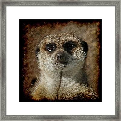Meerkat 4 Framed Print by Ernie Echols