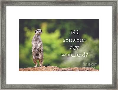 Meerkat Asking If It's The Weekend Yet Framed Print by Jane Rix