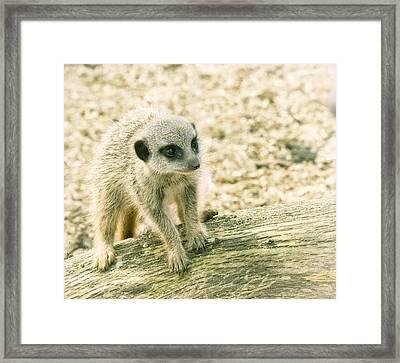Framed Print featuring the photograph Meerkat - Portrait by Chris Boulton