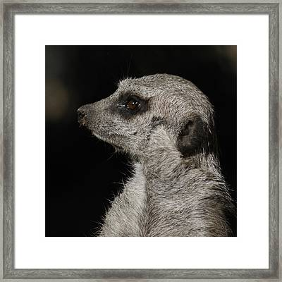 Meerkat Profile Framed Print by Ernie Echols