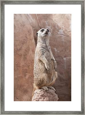 Meerkat Sentry 2 Framed Print