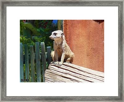 Meerkat Sentry Framed Print by Methune Hively