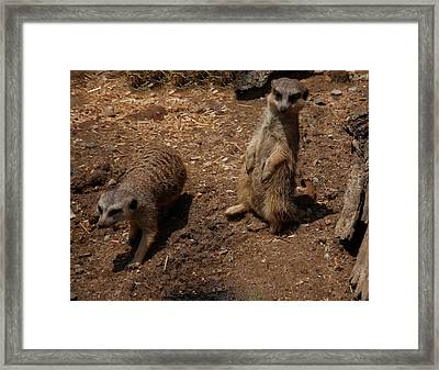 Framed Print featuring the photograph Meerkats by Chris Flees