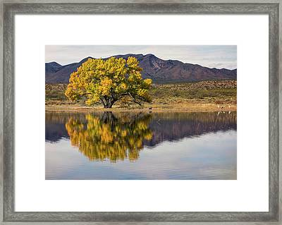 Meet Me At The Pond Framed Print