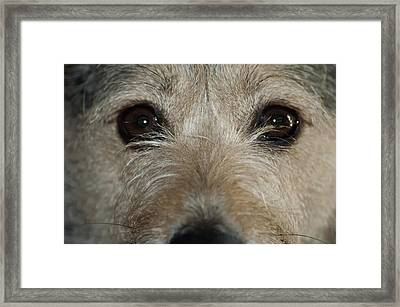 Meet Mikey Framed Print
