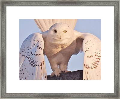 Meet Roofus Framed Print