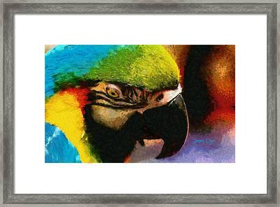 Meet The Brazilian Arara Framed Print by Leonardo Digenio