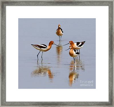Meeting Of The Minds Framed Print by Marty Fancy