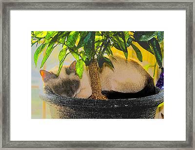 Meezer Tree Framed Print
