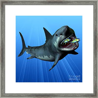 Megalodon Framed Print by Corey Ford