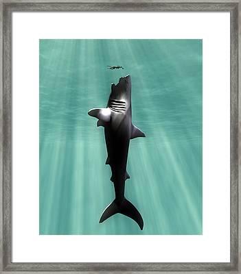 Megalodon Prehistoric Shark With Human Framed Print by Christian Darkin