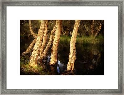 Melaleuca Magic Framed Print by Louise Cooke