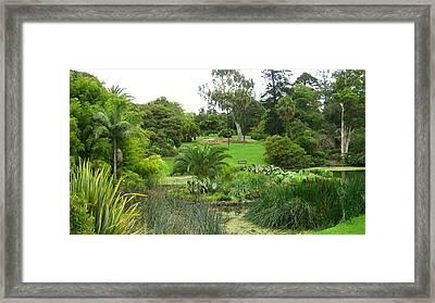 Melbourne Botanical Gardens Framed Print