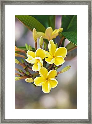 Melemele Framed Print by Jade Moon