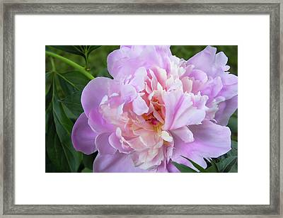 Melissa's Flower Framed Print by JAMART Photography