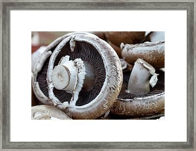 Mellow Mushrooms Framed Print