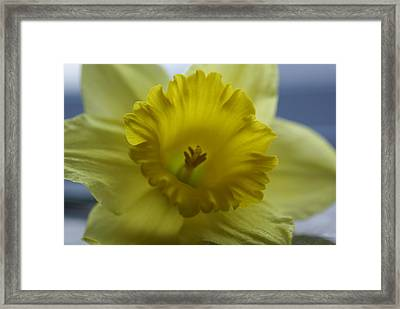 Mellow Yellow Framed Print by Patricia M Shanahan