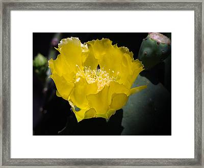 Mellow Yellow Cactus Flower Framed Print