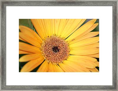 Mellow Yellow Framed Print by Ron Read