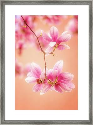 Melodies Of Spring  Framed Print