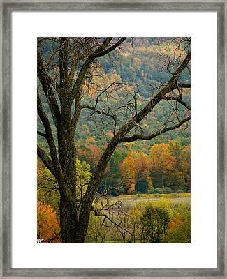 Melody Of Autumn II Framed Print by Debra     Vatalaro