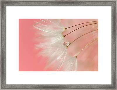 Meloncholy Framed Print by Amy Tyler