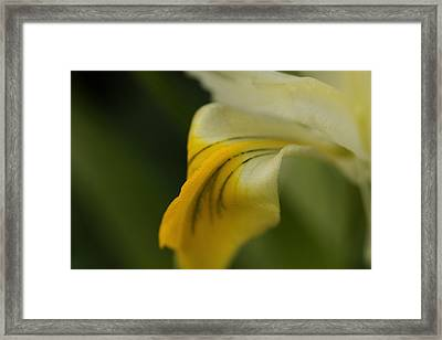 Melting Framed Print by Connie Handscomb