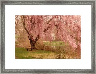Memories - Holmdel Park Framed Print by Angie Tirado