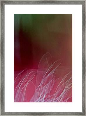 Memories Of A Garden Framed Print