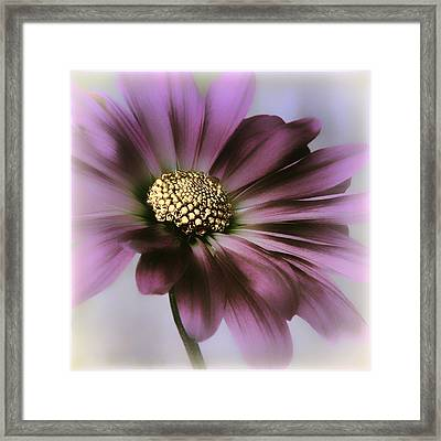 Framed Print featuring the photograph Memories Of Spring by Darlene Kwiatkowski