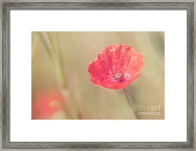 Memories Of Summer.. Framed Print by LHJB Photography